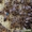 Реализуем пчеломатки Карпатки тип Вучковский #1410600