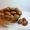 Продам саженцы фундука(орешника, лесного ореха, лещины) - разных сортов. #1509005