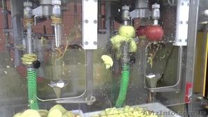 Машина для очистки, нарезания, удаления сердцевины яблок 500 кг/час - Изображение #1, Объявление #1636052